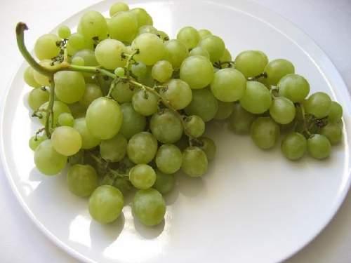 Uva da tavola variet mercato difesa e nutrizione - Uva da tavola coltivazione ...