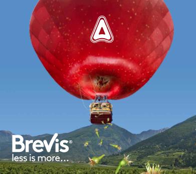 adama-brevis-less-more.png