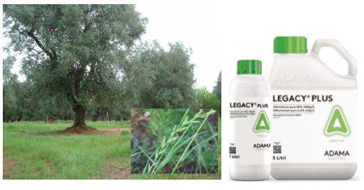 adama-legacy-plus-olivo-apertura.png