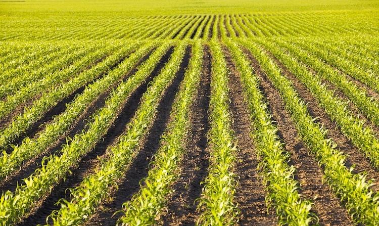 agricoltura-campo-campi-rsooll-fotolia-750x447