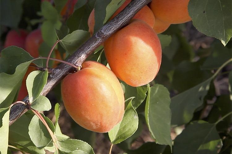 Tutti vogliono Farbela<sup>*</sup> - Plantgest news sulle variet&agrave; di piante
