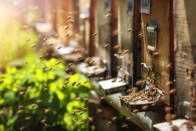 api-apicoltura-by-photografiero-fotolia-750.jpeg
