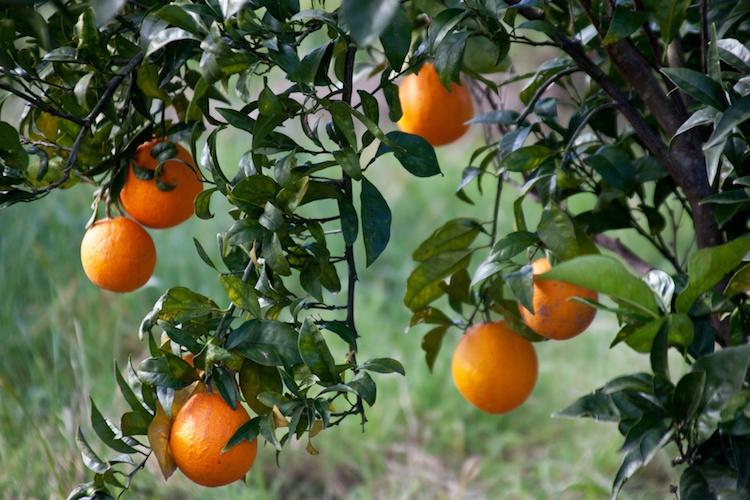 arance-arancia-agrumi-by-giuly-blanchet-fotolia-750.jpeg