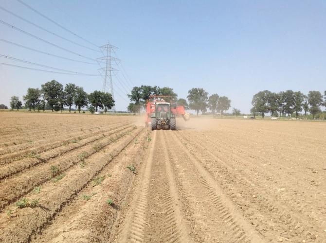 Assopa e appe risultati positivi per le prime scavature for Raccolta patate