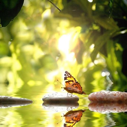 biodiversita-natura-ambiente-by-stefan-korber-fotolia-750x750.jpeg