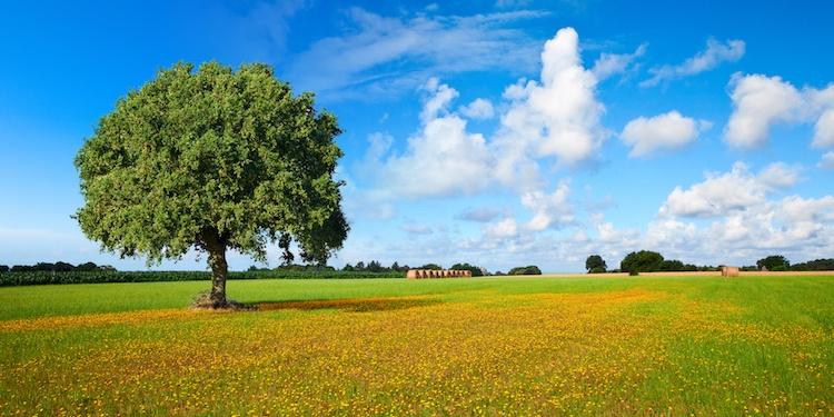 campi-campo-campagna-campagne-albero-prato-by-thierry-ryo-fotolia-750.jpeg