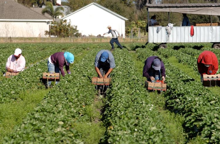 caporalato-lavoro-agricolo-nick-barounis-fotolia-750.jpeg