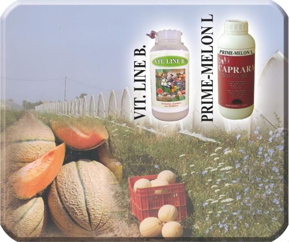 Concime per angurie mulino elettrico per cereali for Coltivare meloni