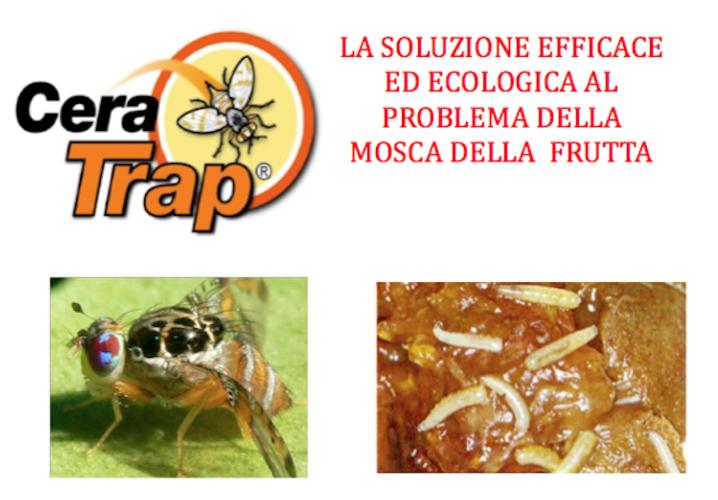 cera-trap-mosca-soluzione-750-fonte-lea.png