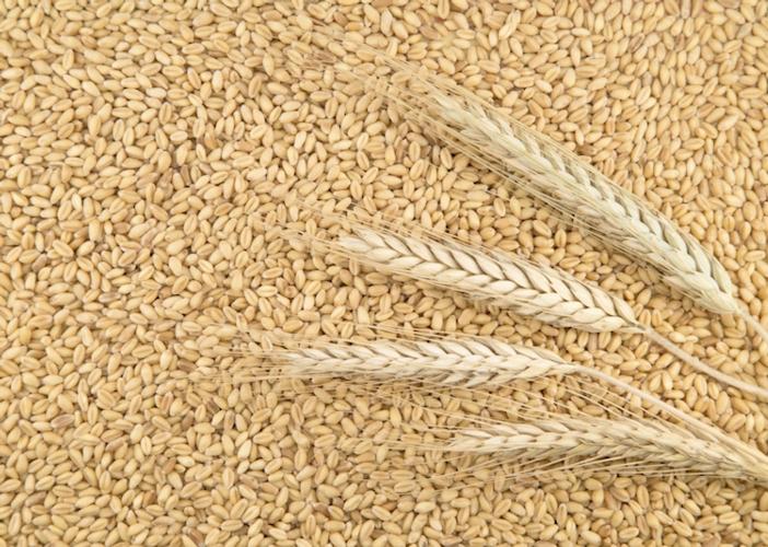 cereali-grano-by-teodora-d-fotolia-750.jpeg