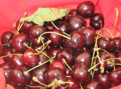 ciliegio-varieta-kordia-byillc