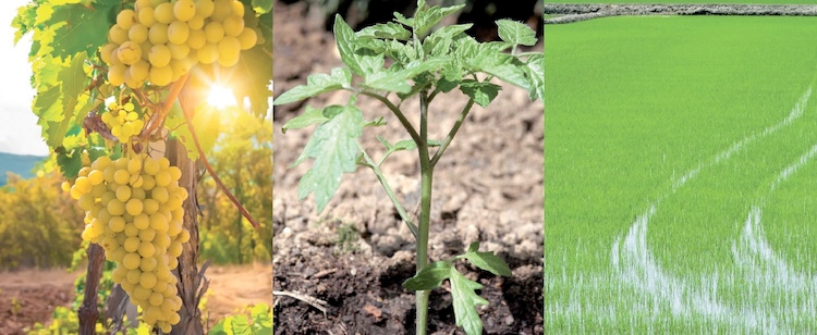 Copren Hi Bio: fungicida rameico in granuli idrodispersibili