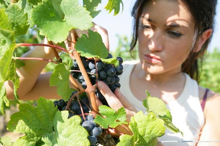 donna-agricoltura-donne-by-auremar-fotolia-750x500.jpg