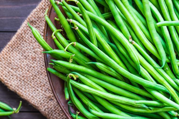 """Visita guidata """"Fagiolino da mercato fresco"""" - Plantgest news sulle varietà di piante"""