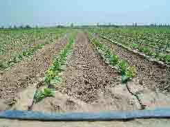 Un buon controllo del clima in serra agronotizie for Irrigazione serra