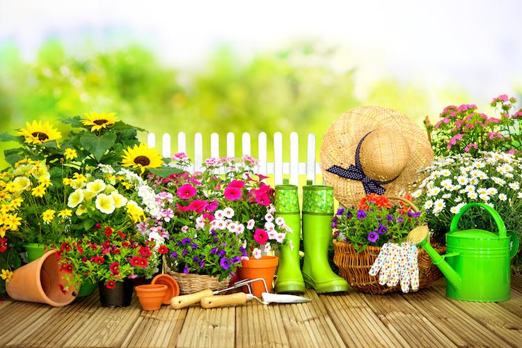 fiori-giardinaggio-hobbistica-by-alexander-raths-fotolia-750.jpeg