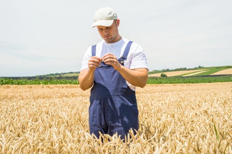 Risultati immagini per grano di importazione