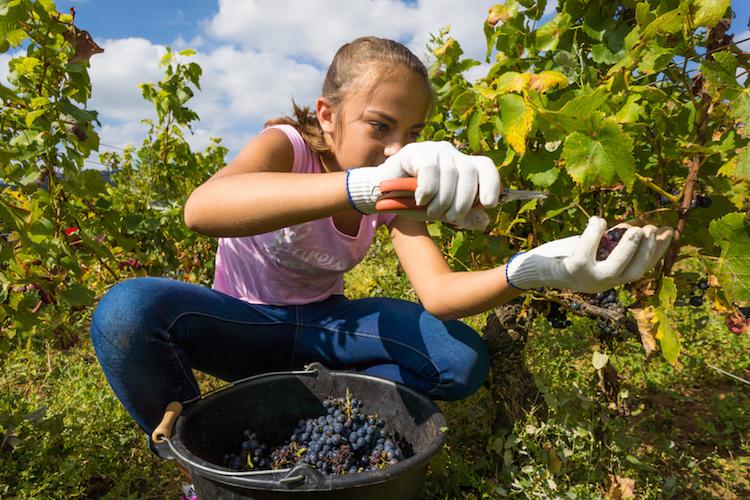 giovani-agricoltura-studenti-tirocinio-by-eleonore-h-fotolia-750.jpeg