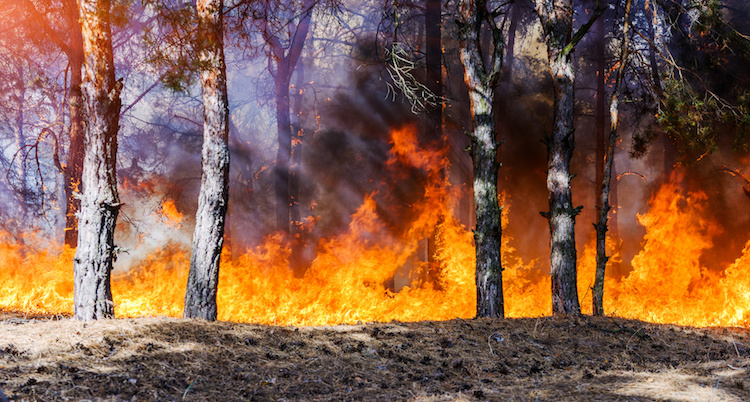 incendio-by-yelantsevv-fotolia-750.jpeg