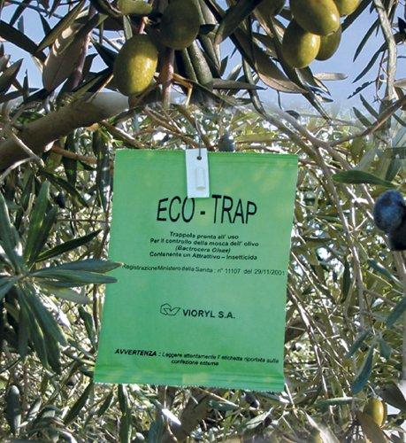 Mosca dell 39 olivo intrachem distribuisce eco trap in tutta for Trappola per talpe fai da te