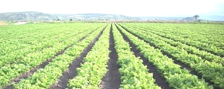 Irrigazione a goccia le nuove tecnologie di plastic for Sistema irrigazione a goccia