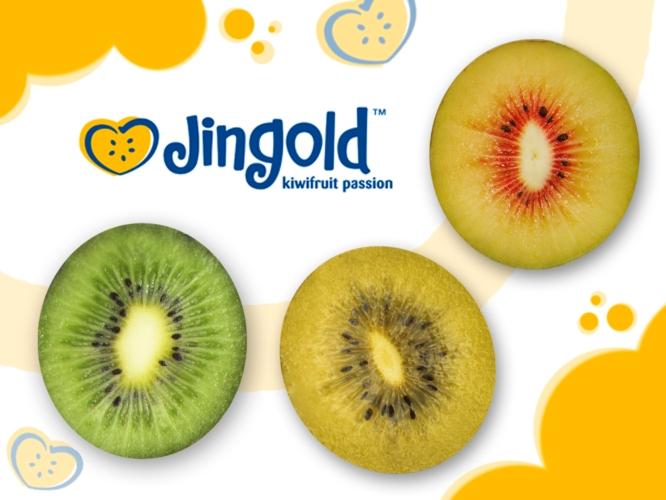 Kiwi l 39 innovazione tricolore di jingold agronotizie for Kiwi giallo piante acquisto