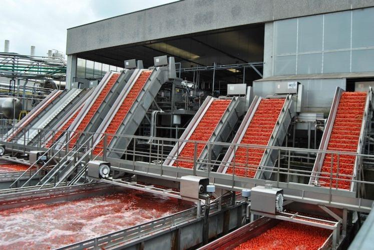lavorazione-pomodoro-fonte-oi-pomodoro-da-industria-del-nord-italia.jpg