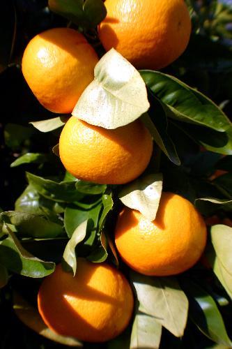 Lo spirito di clementine