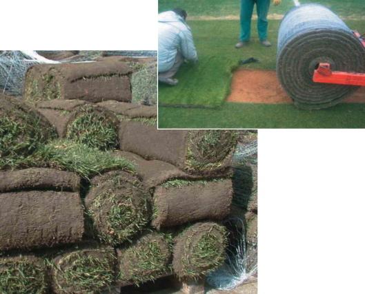 La manutenzione dei campi da calcio in erba naturale e for Erba in rotoli
