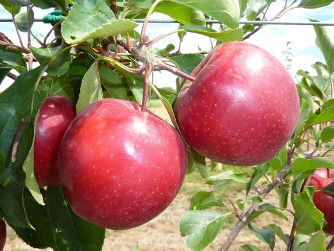 Geoplant, la qualità al centro del progetto - Plantgest news sulle varietà di piante