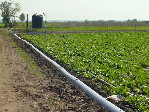Barbabietola da zucchero l 39 irrigazione a goccia secondo for Netafim irrigazione