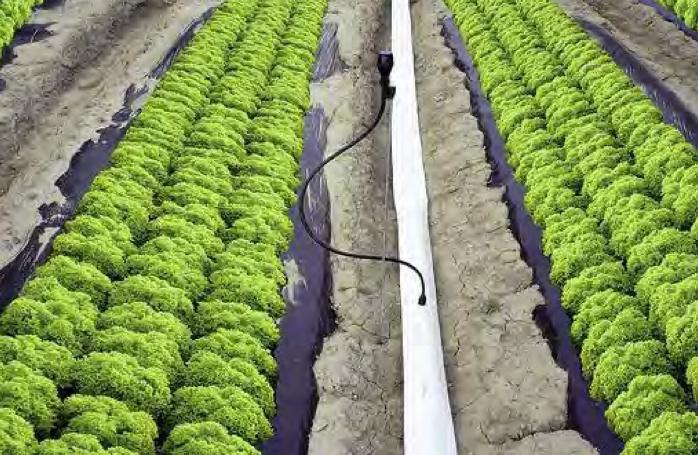 Nuove soluzioni nel settore della micro aspersione for Netafim irrigazione