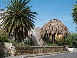 Punteruolo rosso delle palme caratteristiche normativa - Punteruolo rosso in casa ...