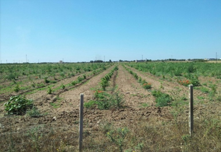 bamb buon reddito da una coltura virtuosa agronotizie