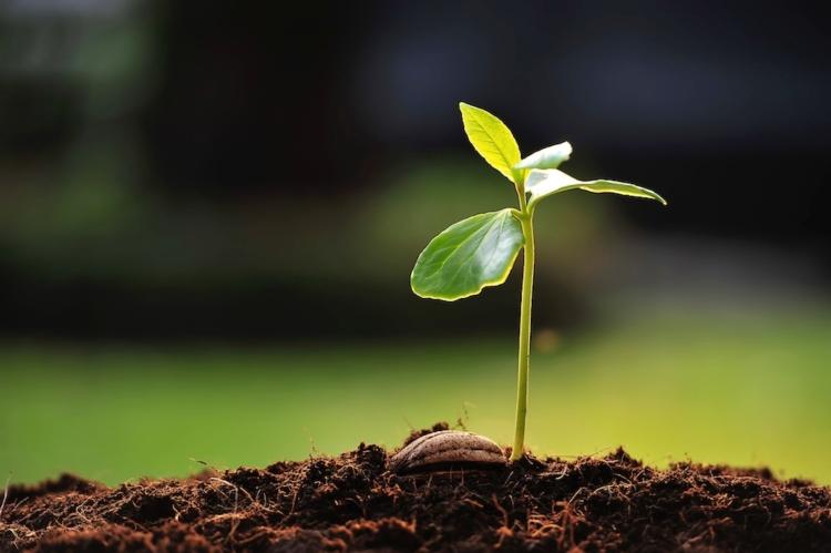 piantina-pianta-germoglio-terreno-seme-terra-by-amenic181-fotolia-1000x665.jpg (750×499)