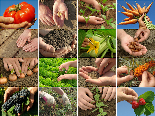 plantgest-varie-specie-colture-novita-agosto-2017-depositphotos