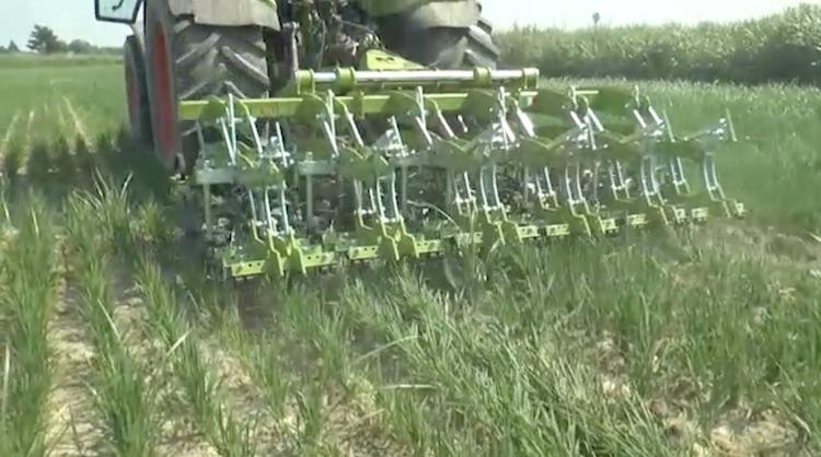 riso-controllo-meccanico-malerbe-video-barbara-righini-luglio-2017.jpg