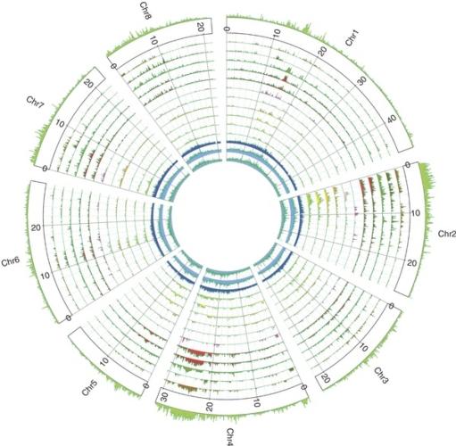 sequenziamento-genoma-pesco-nature-genetics.jpg