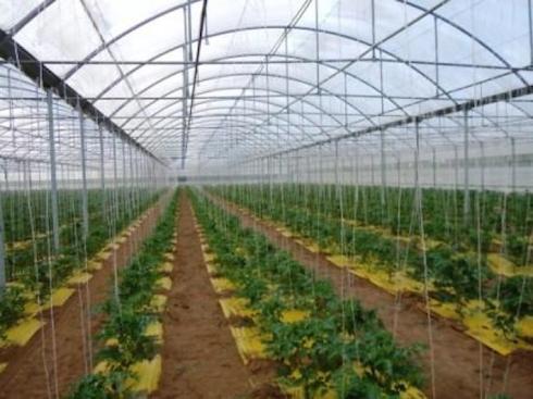 Serre mediterranee come migliorarne la produttivit for Irrigazione serra