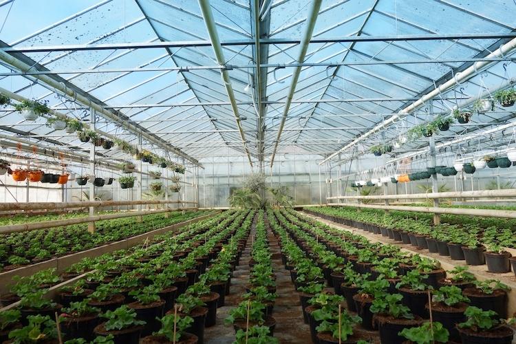 Soluzioni sostenibili per un'orticoltura di qualità - Plantgest news sulle varietà di piante