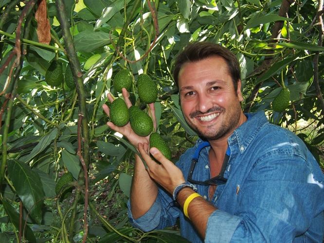 Sicilia avocado frutta made in sicily su misura for Avocado coltivazione