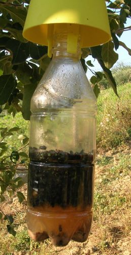 Difesa ecologica dei frutteti la soluzione in un tappo for Trappola per talpe fai da te