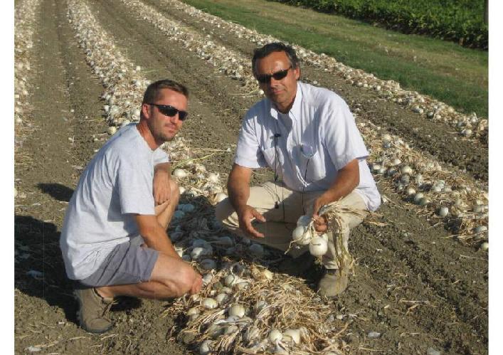 Cipolla a giorno lungo e semina primaverile agronotizie for Semina cipolle
