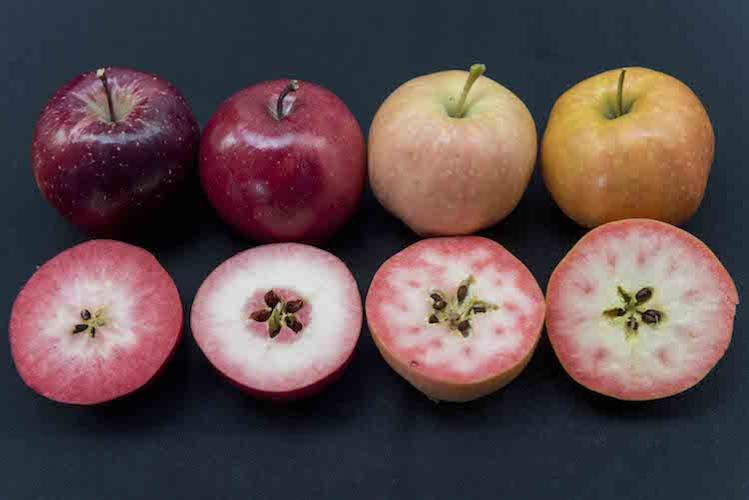 ifored le mele a polpa rossa tra poco sul mercato