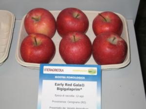Top Plant punta al recupero della mela di pianura - Plantgest news sulle varietà di piante