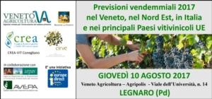 Veneto, focus sulle previsioni vendemmiali - Plantgest news sulle varietà di piante