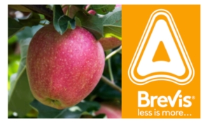 Brevis: un prodotto dai molti perché