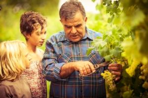 Dal Ministero nuovo standard per la sostenibilità dei vini