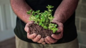 agricoltore-mani-piante-origano-byflickrcc20-usdagov