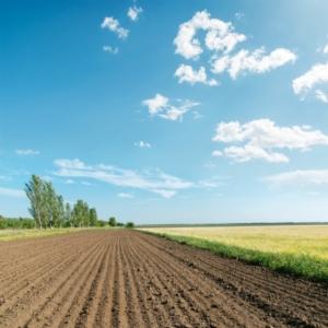 Terreni, prezzi in flessione: scendono sotto i 20mila all'ettaro